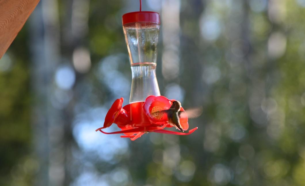 15_hummingbird1