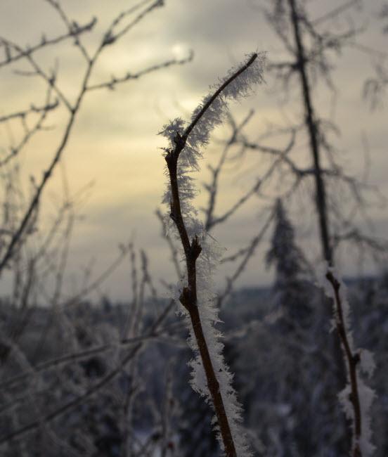 15_icecrystals2