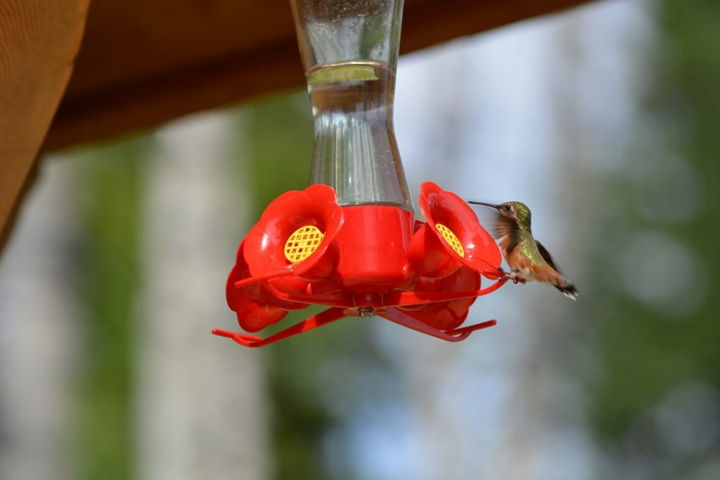 16_Hummingbird3
