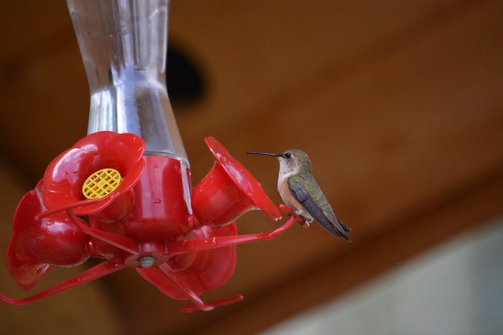16_Hummingbird6